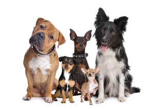 Kelowna dog training testamonials