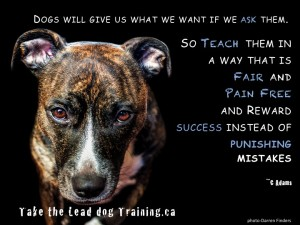 Positive reinforcement dog training in Kelowna