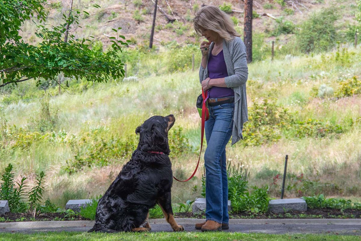 Kelowna Dog Training | Take The Lead Dog Training